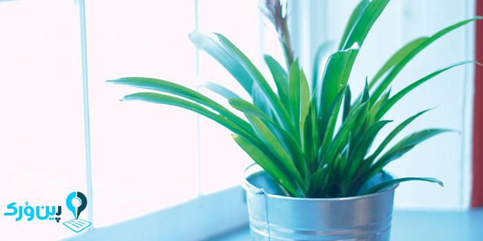 نور گیاه آپارتمانی