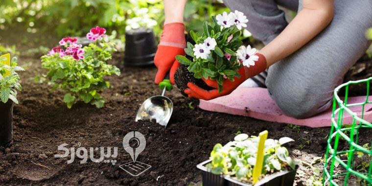 کاشت سبزی در باغچه چگونه