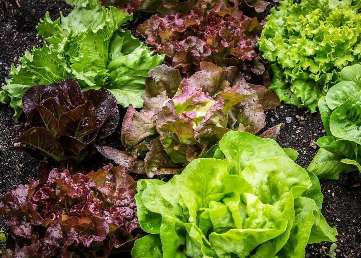 کاشت سبزیجات