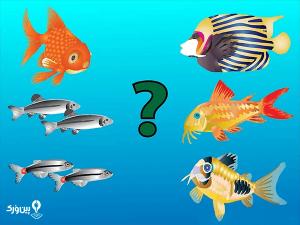 ماهی گرمسیری و سردآبی