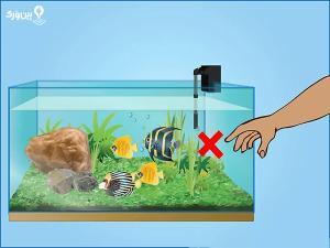 ترساندن ماهی