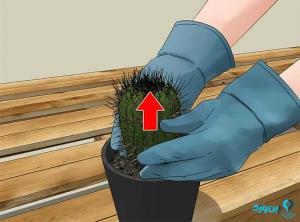 تعویض گلدان اولیه