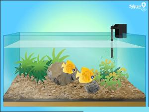 تعداد ماهی ها