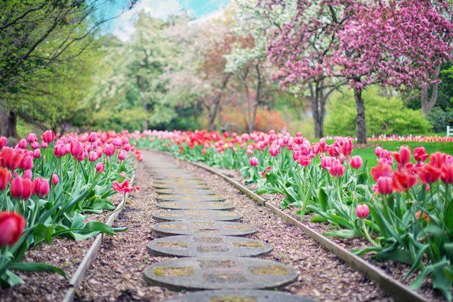 خانهداری در بهار