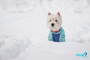 مراقبت از سگ در زمستان