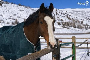 مراقبت از اسب در زمستان