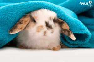 مراقبت از خرگوش در زمستان