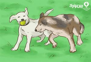 سگ ها