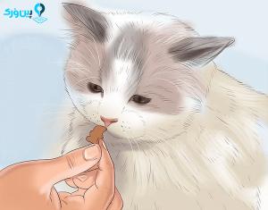 غذا برای حیوان خانگی