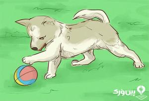 بازی کردن سگ