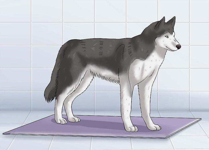 تصاویر شستن سگ 1