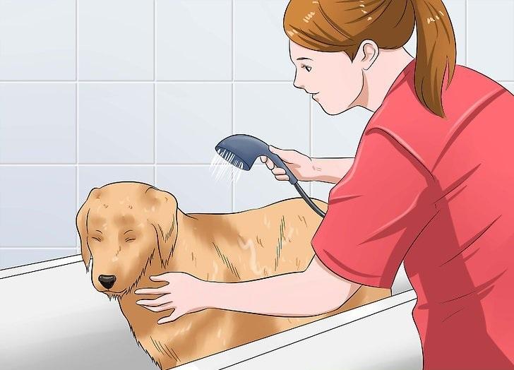 تصاویر شستن سگ 5