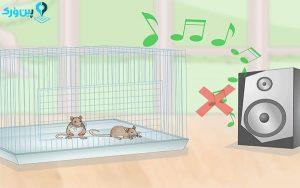 محل قراردادن قفس موش