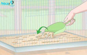 پر کردن قفس موش