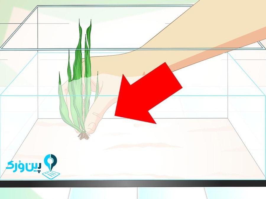 تمیز کردن آب آکواریوم با گیاه