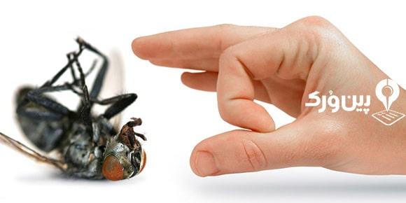 نحوه از بین بردن حشرات خانگی