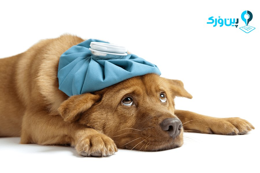 انواع بیماری در سگها