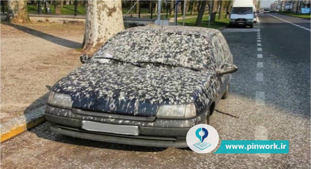 فضله پرنده روی ماشین