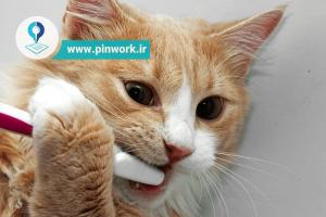 خرید گربه و بهداشت گربه