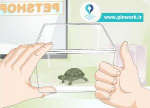 نگهداری لاکپشت
