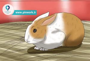 راهنمای مراقبت خرگوش