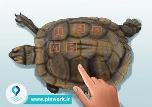 محاسبه سن لاکپشت