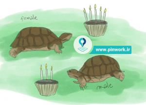 پرورش لاکپشت