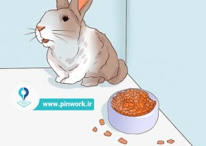 درمان بیماری خرگوش