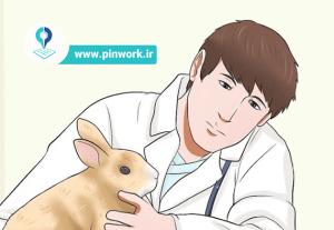 مراقبت و نگهداری خرگوش