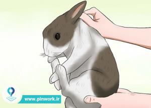 نگهداری و مراقبت خرگوش