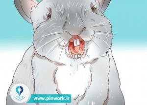 شناخت بیماری و درمان خرگوش