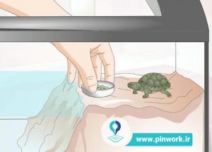 مراقبت و نگهداری لاکپشت