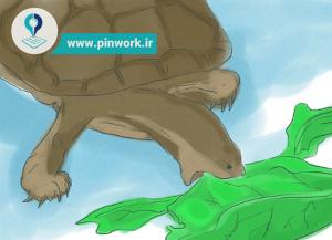 نحوه پرورش لاکپشت