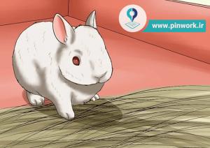 مراقبت خرگوش