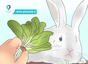 سبزیجات خرگوش