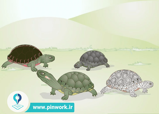 نگهداری از لاکپشت