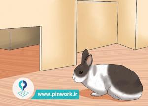 نگهداری و مراقبت از خرگوش