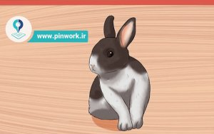 نحوه نگهداری خرگوش