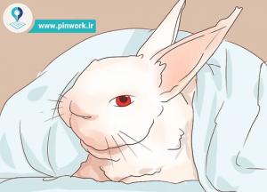 شناخت بیماری خرگوش