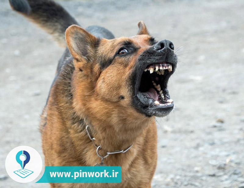 پارس سگ