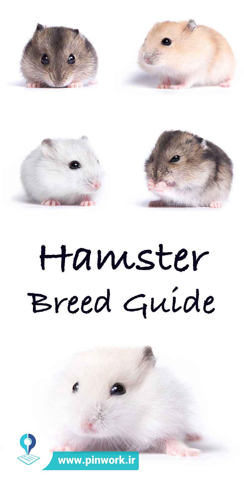 همسترها